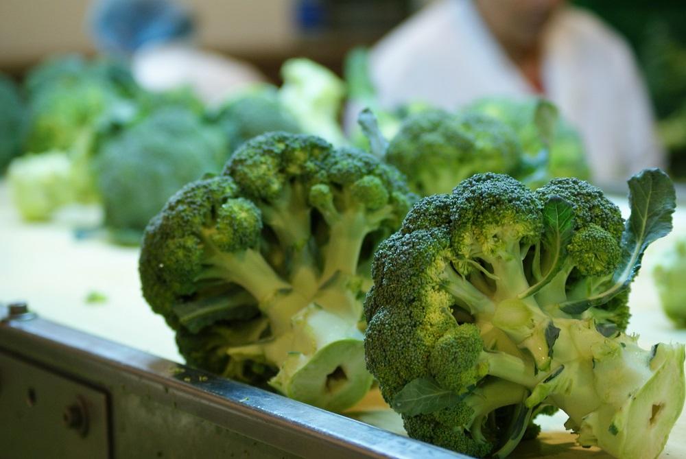 Brócoli fresco para ganar en salud
