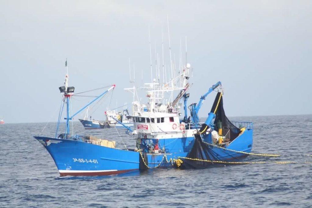 Certificación pesquería de sardina en el Golfo de Vizcaya