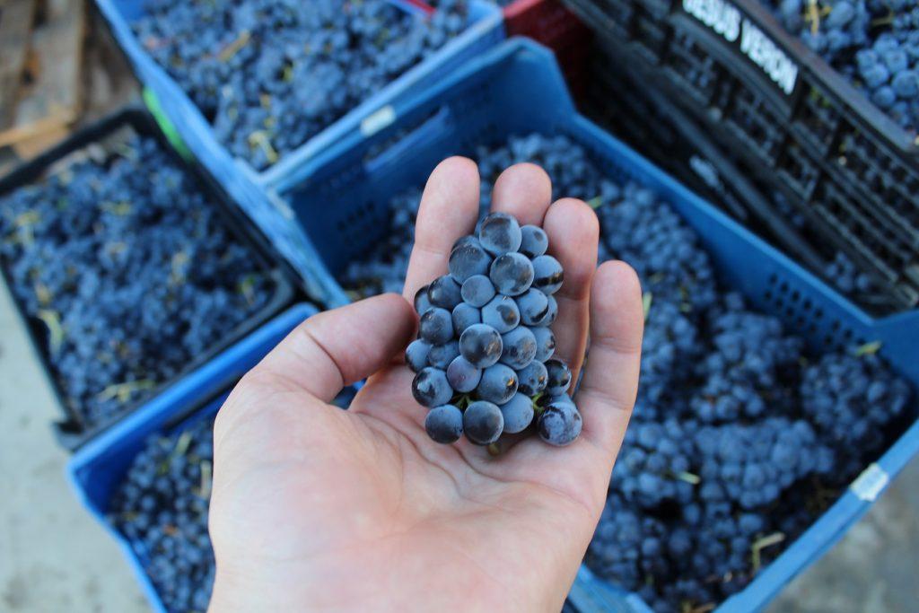 La Ruta del Vino Sierra de Francia se incorpora al club de producto Rutas del Vino de España